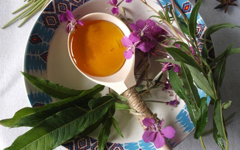 Эффективное лечение Иван-чаем множества недугов