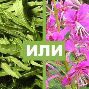 Используем листья и цветы Иван-чая для оздоровления