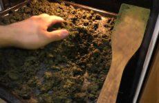 Как правильно высушить иван-чая, особенности сбора растения