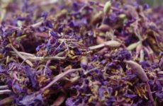Как приготовить вкусный иван-чай в домашних условиях