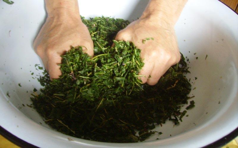 Кипрей иван-чай заготовка приготовление и этапы переработки