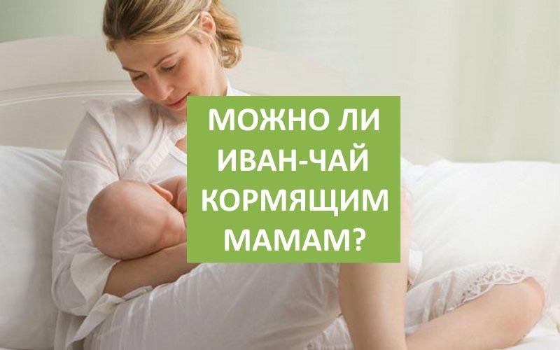 Можно ли Иван-чай кормящим мамам