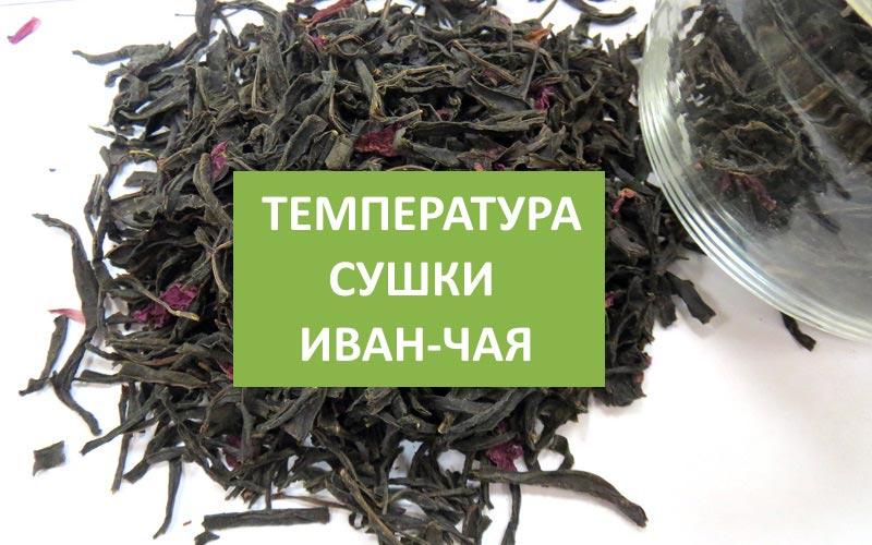 При какой температуре сушить Иван-чай