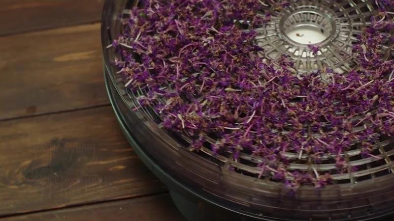 Поэтапность приготовления иван-чая в домашних условиях