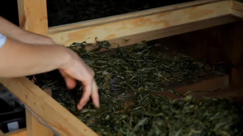 Способы заготовки Иван-чая на зимний период