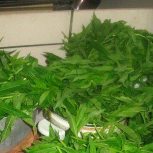 Сбор и заготовка листьев Иван-чая