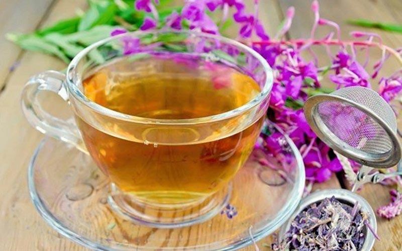 В чем уникальность растения Иван-чай