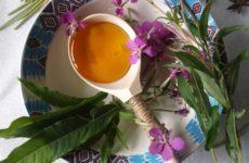 Что же такое Иван-чай, и какими особенностями в лечение недугов он обладает