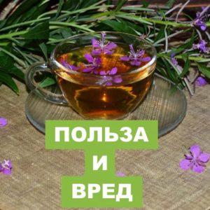 Химический состав, полезные элементы Иван-чая и его вред на организм человека