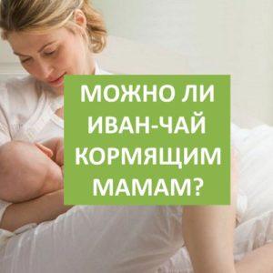 Можно ли Иван-чай кормящим женщинам?