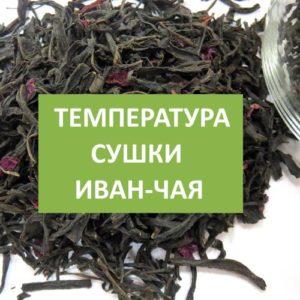 При какой температуре сушить Иван-чай?