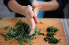 Самостоятельное ферментирование иван-чая в домашних условиях
