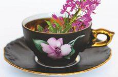 Способы применения иван-чая, полезные свойства и рецепты